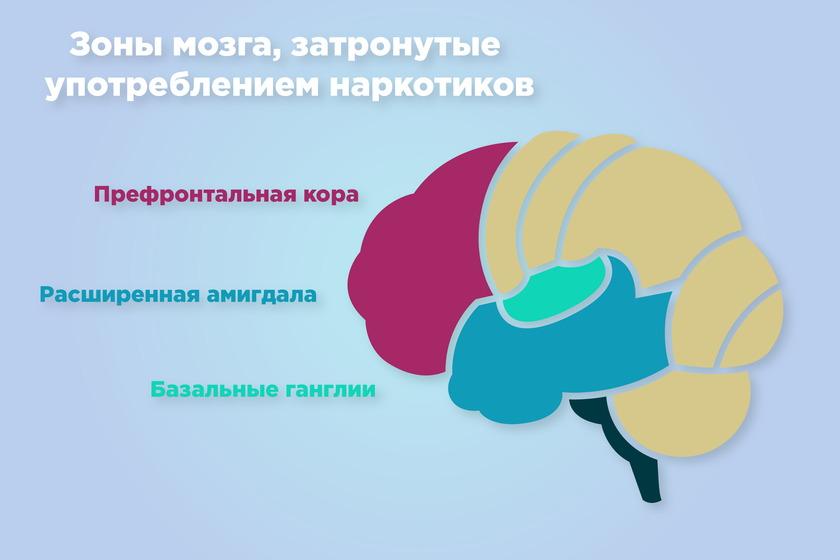 На какие части мозга действует наркотик